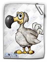 Desmond the Dodo (colour)